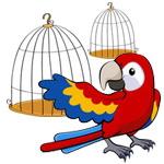 معمای ریاضی: طوطی های در قفس!